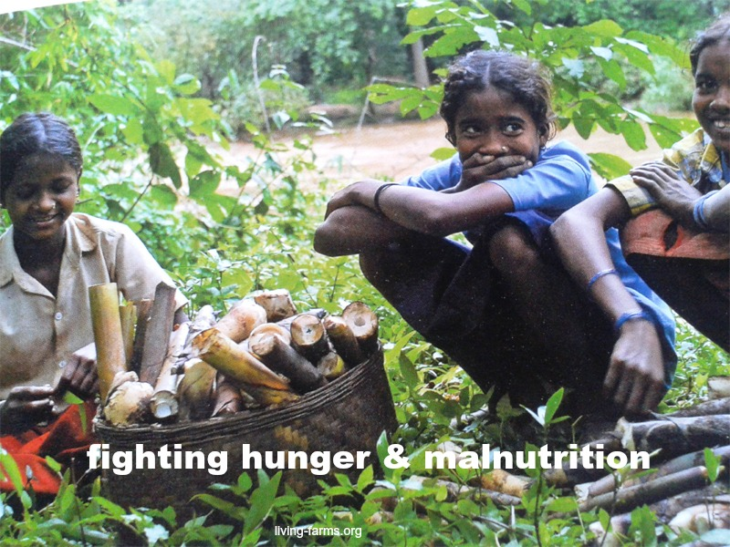 Adivasis in India and forest dependent communities fighting hunger malnutrition in odisha