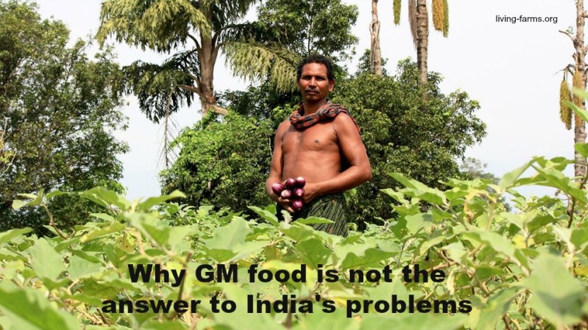 Why Genetically Modified Food Is Not the Solution to India's Problems