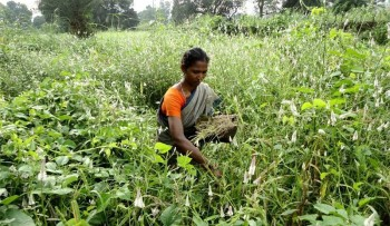 adivasis in India farming knowledge and forest dependent communities in India